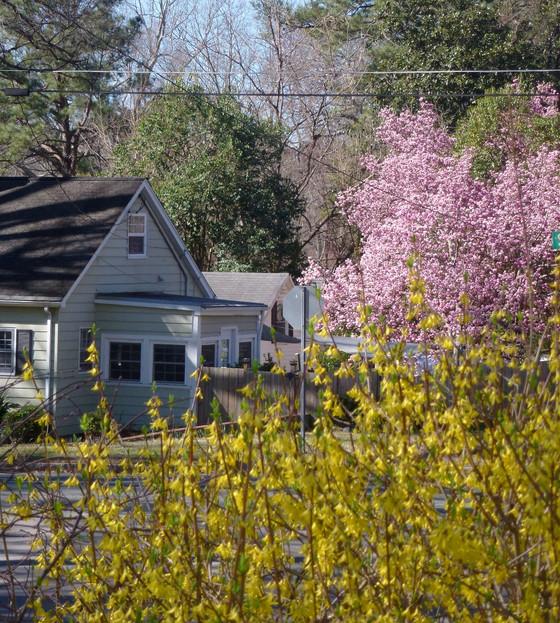 Spring in February 2017