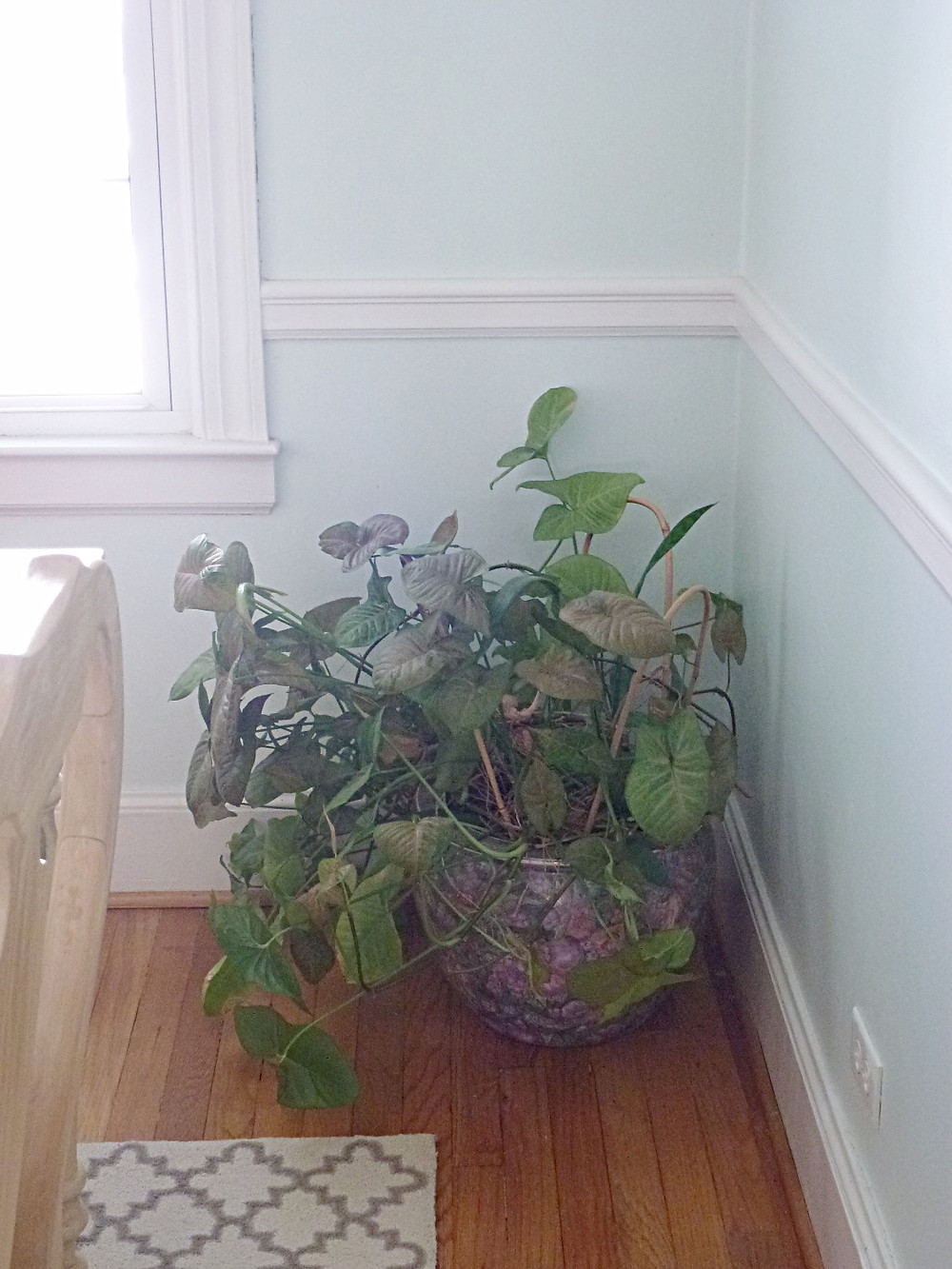 Mystery plant and pot