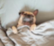 A dog is sleeping in blanket