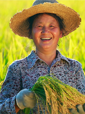 happy-farmer-holding-rice-in-hand-pictur