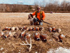 A good day for Pheasant