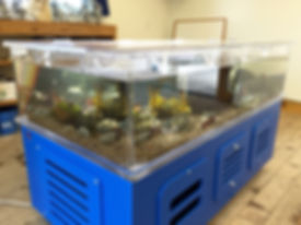100 Gallon Touch Tank Camp Ocean Pines,