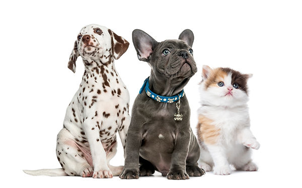 group-of-kitten-and-puppies-sitting-isol