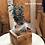 Thumbnail: Cassettina con pianta