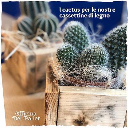 Cassettina legno cactus