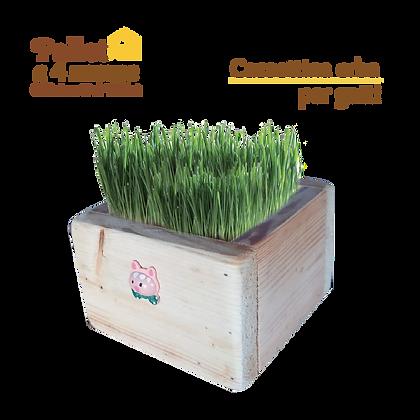 Cassettina erba per gatto