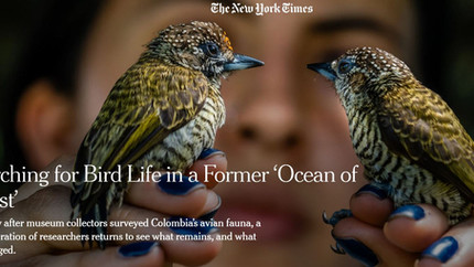 Expeditions BIO Alas, cantos y colores featured in The New York Times