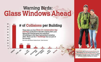 The Chronicle writes about bird-window collisions at Duke