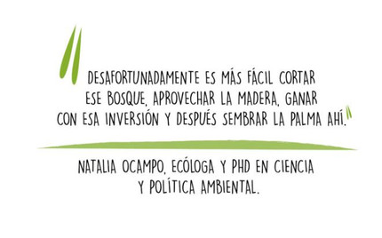Quoted by Mongabay about oil palm in Latin America