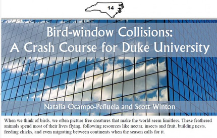 Article for the NC Wildlifer about bird-window collisions at Duke