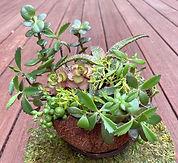 Succulents Redux.jpg
