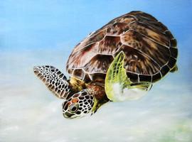 Akamal Turtle