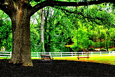 22az_9413 tree swing and bench with pond