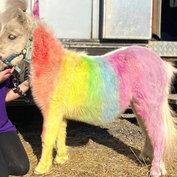 Mane and tail chalks