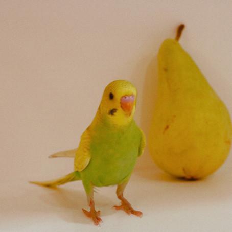Kuşlarda Şırınga ve Besleme Aparatı Kullanımı
