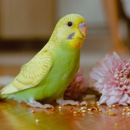 Kuşlarda Megabakteri: Kuruma Hastalığı