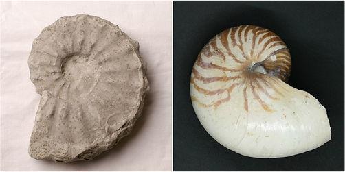 fossil pair 2.jpg