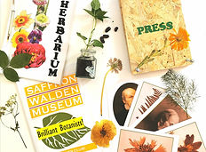 Image of the content of a craft pack for children on the topic of botany. It includes a plant press, seedling and collections photographs