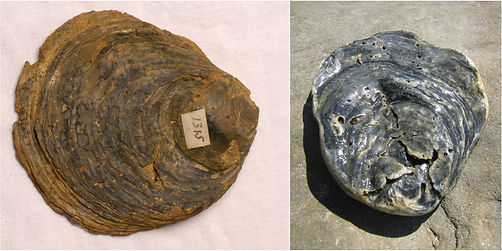 fossil pair 4.jpg