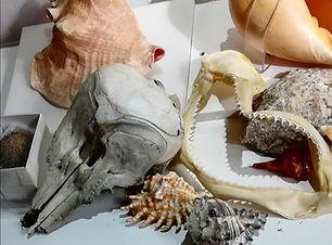 Image of skulls, jaws and shells.