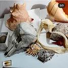 Image of skulls, jaws and shells_