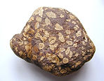 Image of a sedimentary rock