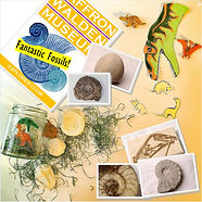 Image of the content of a craft packs for children on the theme of dinosours and fossils