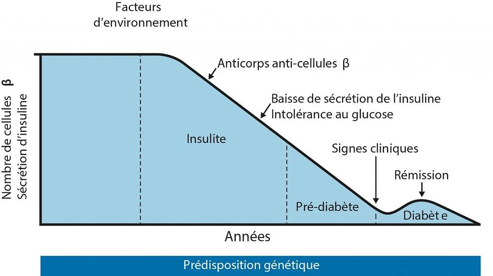 Apparition du diabète de type 1 - AJD-diabète.fr