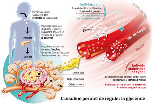 L'insuline permet de réguler la glycémie - Le Figaro Santé