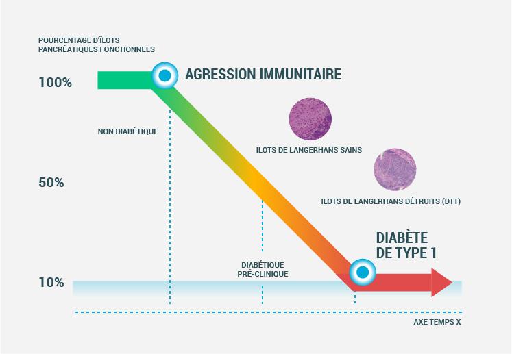 Agression immunitaire dans le DT1 - Centre Européen d'Etude du Diabète