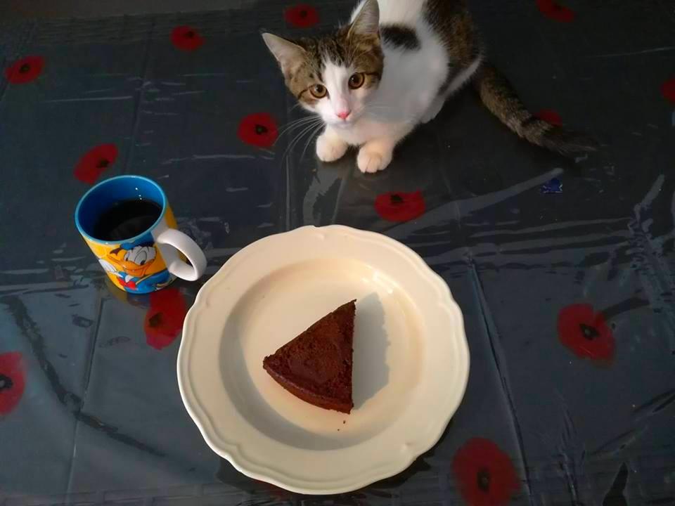 Gâteau fondant au chocolat - 29 gr de glucides - Alfredlediabete.com