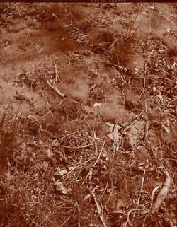 Koke, Koeda (Twigs, Moss)