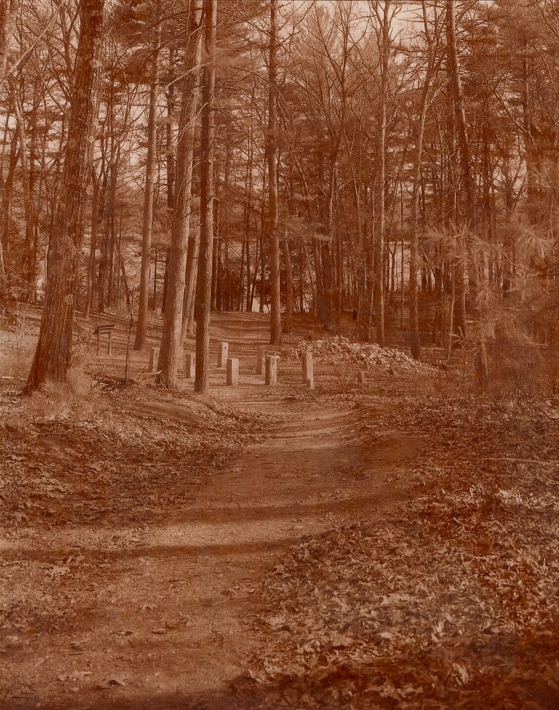 Thoreau's original cabin site