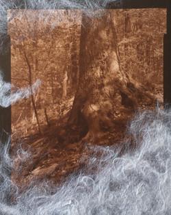 Nekko (roots), image detail