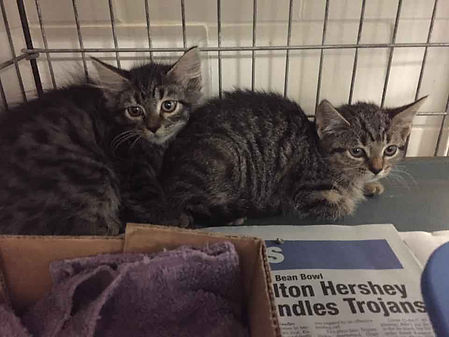 Feral Kittens Rescued