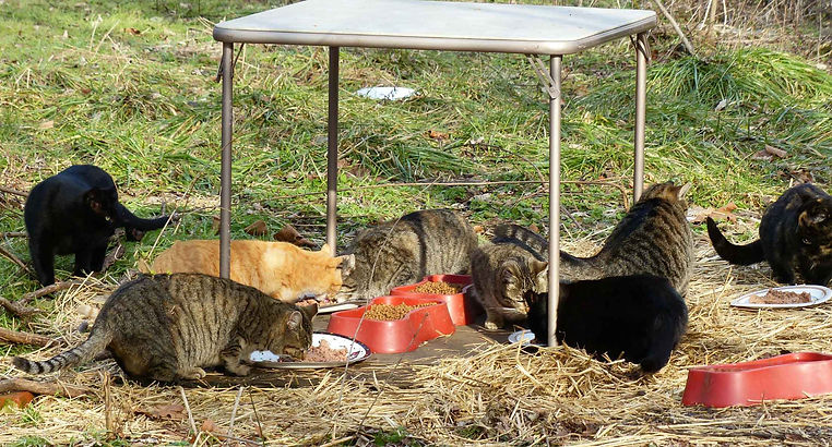 Feral Cats Derry Township