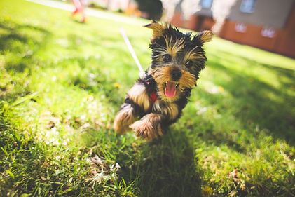 Animal chiropractic, pet chiropractic, dog chiropractic, animal adjustments, pet adjustments