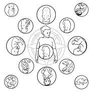 Fetal Compass