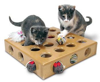 cat sitter,pet sitter,Snoopys cat sitting,pet sitting,Santa barbara cat sitter,cat