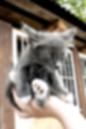 Snoopy's Cat Sitting, Santa Barbara Cat sitting, Santa Barbara Pet Sitter -  cat, cats, cat care, cat boarding, Santa Barbara Pet Sitting