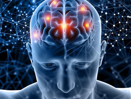 Le cerveau ou centre de commandement de nos fonctions vitales