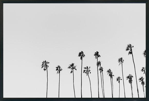 Palms of L.A.
