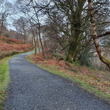 Derrybawn Woodland Walk from the Green Rd.