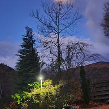 Full moon on bare tree
