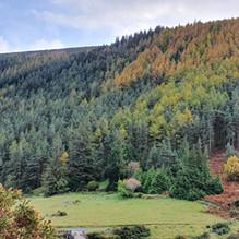 Glendasan Valley looking South East