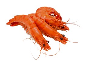 Shrimp%20CHOSO_edited.png