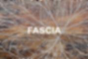 fascia.png