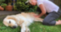 Canine Massage.jpg
