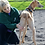 Thumbnail: Introduction to TTouch Body Work - Learn At Home with Your Dog