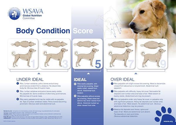 Body Condition Score.jpg